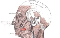 risorius muscle facial slimming side effect